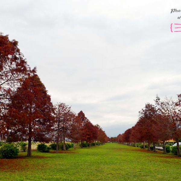 宜蘭縣 休閒旅遊 景點 景點其他 宜蘭三星 落羽松