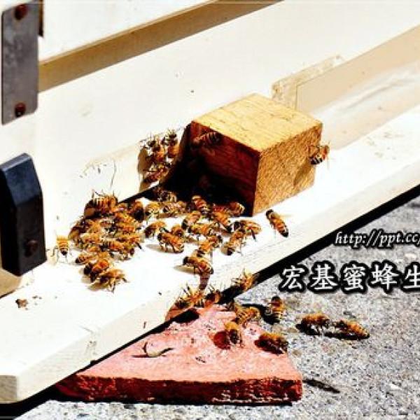 南投縣 休閒旅遊 宏基蜜蜂生態農場