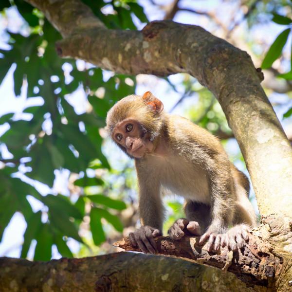 台南市 觀光 觀光景點 烏山彌猴保護區