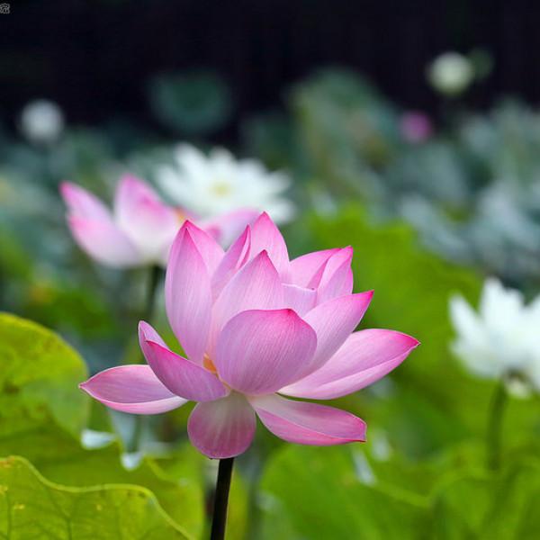 台北市 觀光 公園 至德園