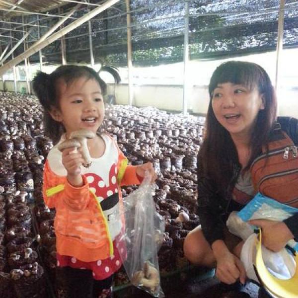 台中市 休閒旅遊 景點 觀光農場 阿亮香菇園