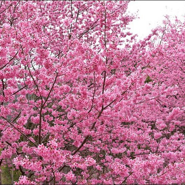 新竹縣 休閒旅遊 景點 觀光花園 萬里山園