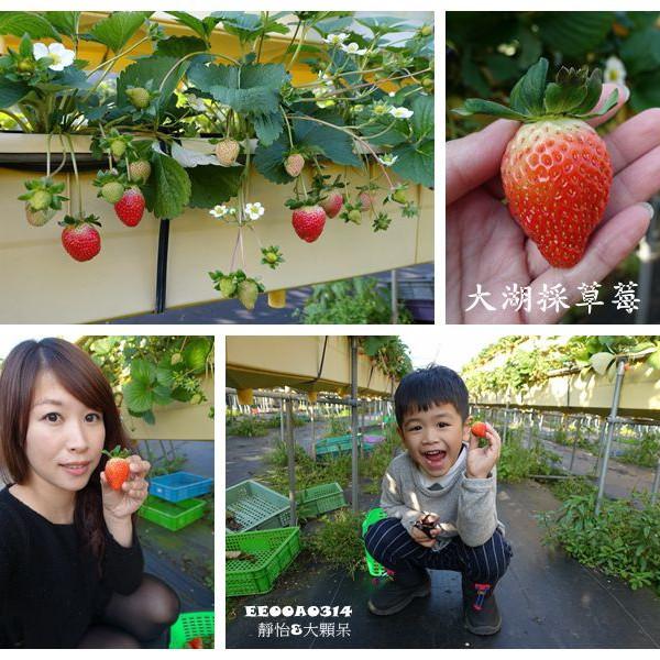苗栗縣 休閒旅遊 景點 觀光果園 六合高架草莓園