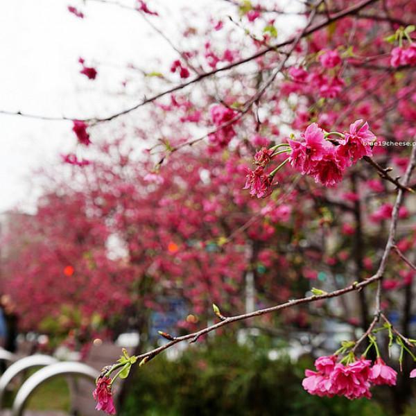 台中市 休閒旅遊 景點 公園 崇德榕園
