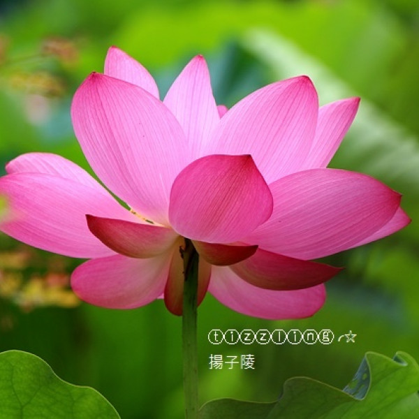 台北市 休閒旅遊 景點 公園 臺北植物園
