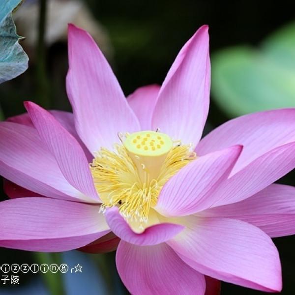 台北市 觀光 公園 臺北植物園