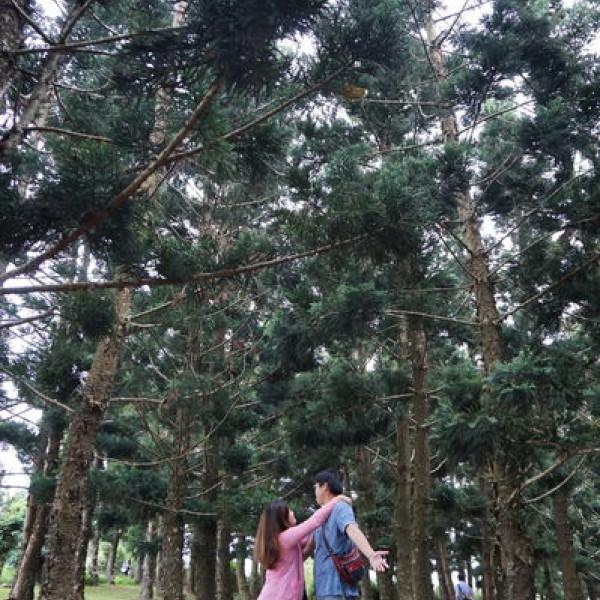 台中市 觀光 觀光景點 九天黑森林