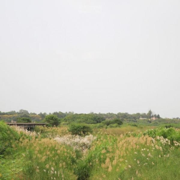 台南市 觀光 觀光景點 菅芒花秘境