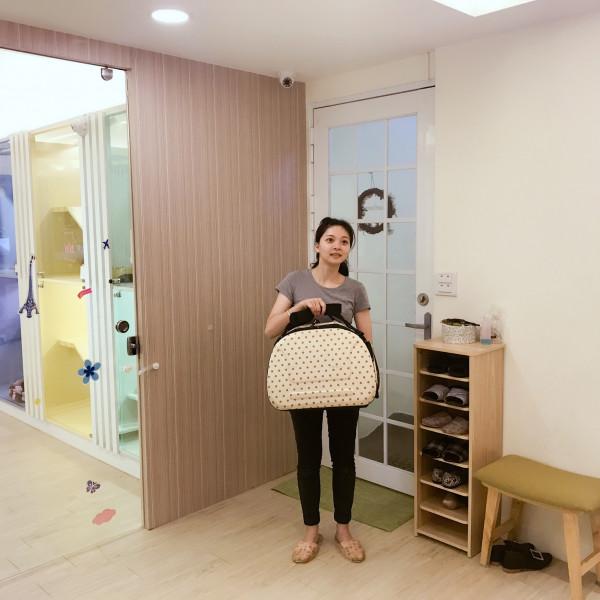 台北市 購物 貓語花香精品貓旅館