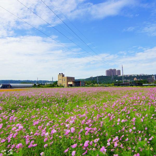 桃園市 觀光 觀光景點 2016桃園大溪花彩節