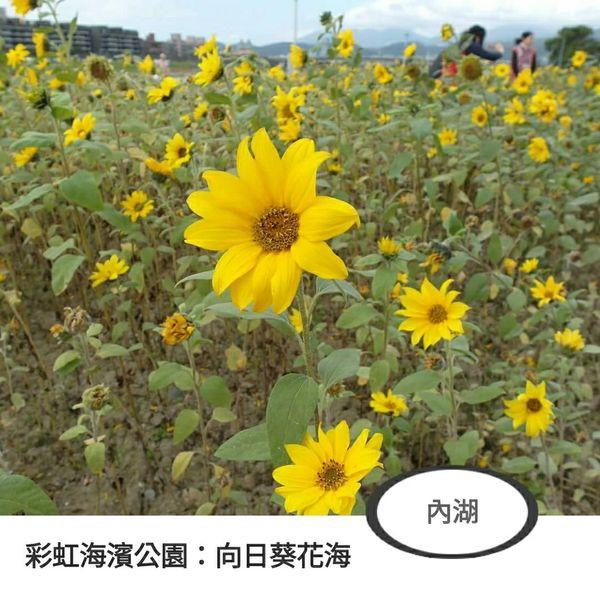 台北市 觀光 公園 彩虹海濱公園