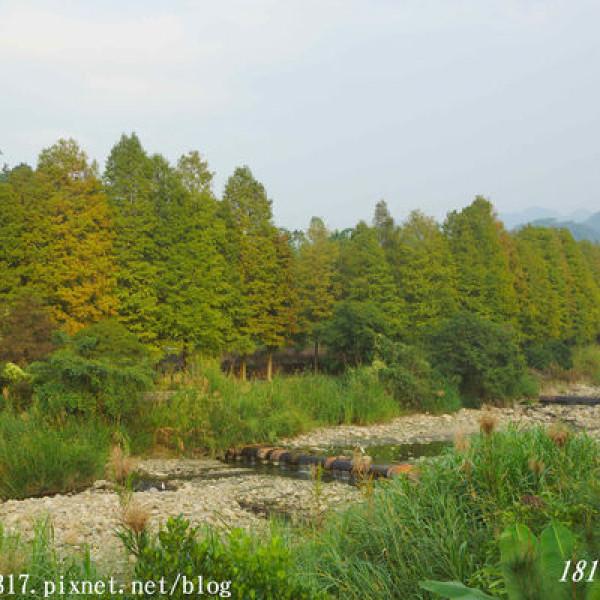 雲林縣 休閒旅遊 景點 景點其他 古坑桂林村落羽松步道