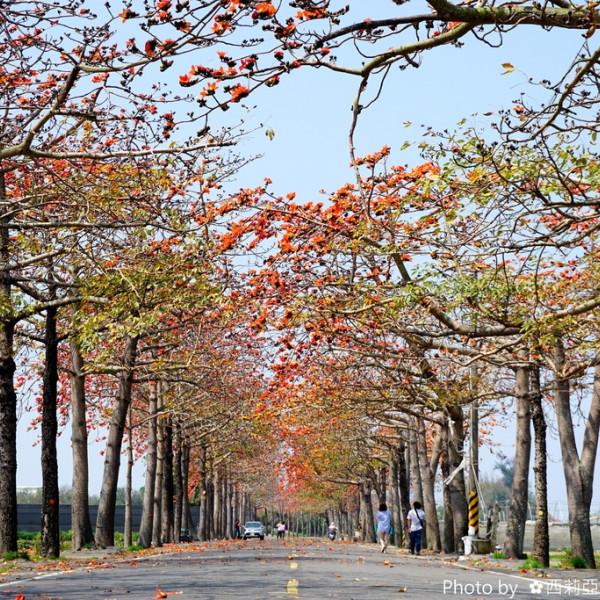 台南市 觀光 觀光景點 苓子寮木棉花道