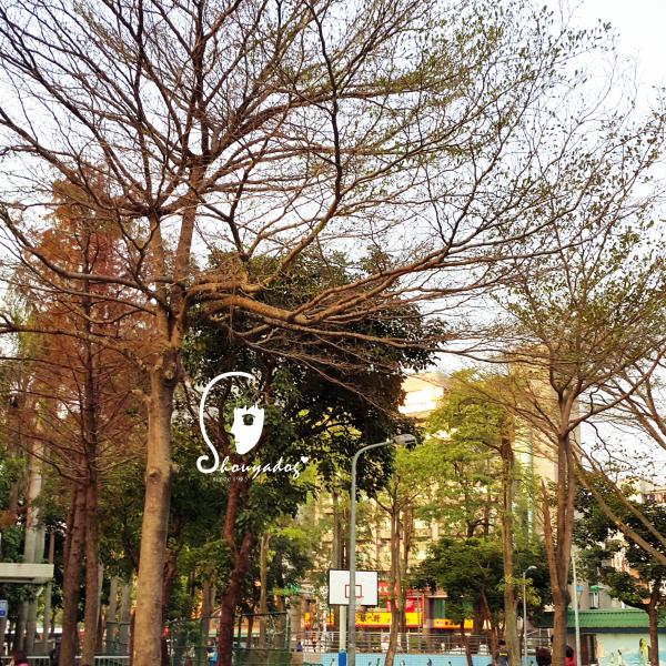 台北市 休閒旅遊 景點 公園 五分埔公園