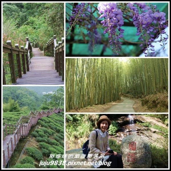 嘉義縣 觀光 觀光景點 瑞里綠色隧道