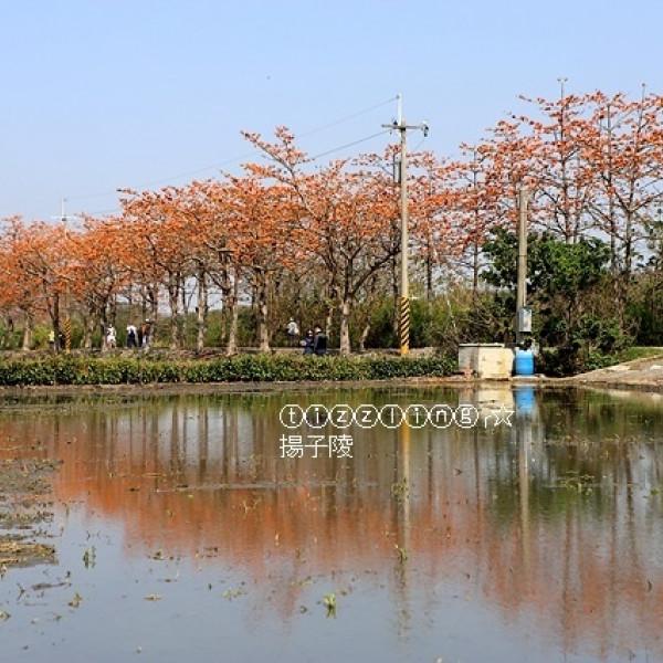 彰化縣 觀光 觀光景點 二林木棉花道