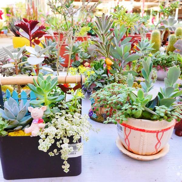 新北市 購物 其他 台灣植物社