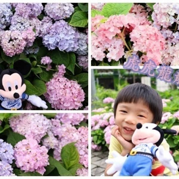 新北市 觀光 公園 泰山繡球花公園