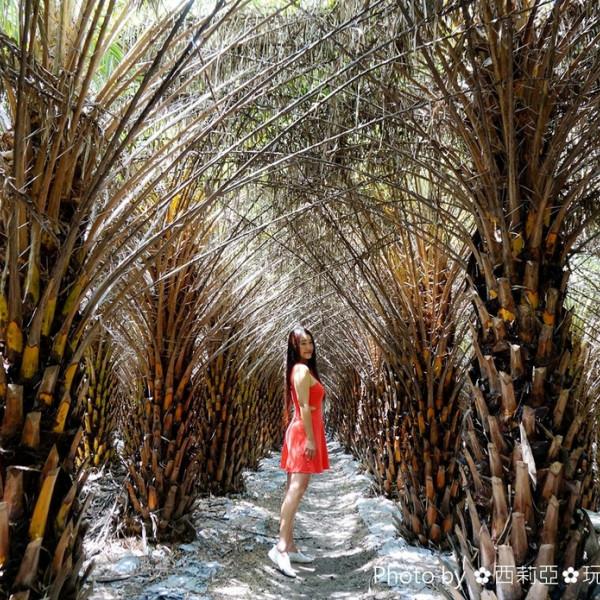 台中市 休閒旅遊 景點 景點其他 台中大肚區中東海棗田