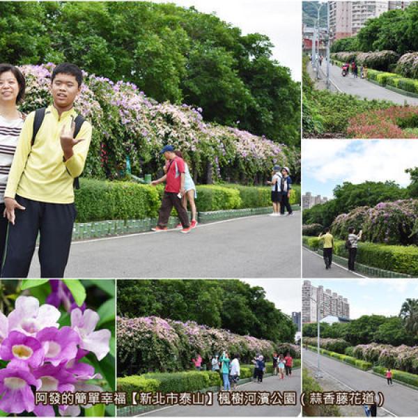 新北市 休閒旅遊 景點 公園 楓樹河濱公園