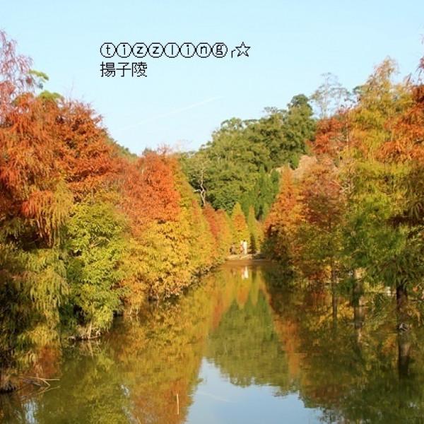 苗栗縣 休閒旅遊 景點 森林遊樂區 三灣落羽松