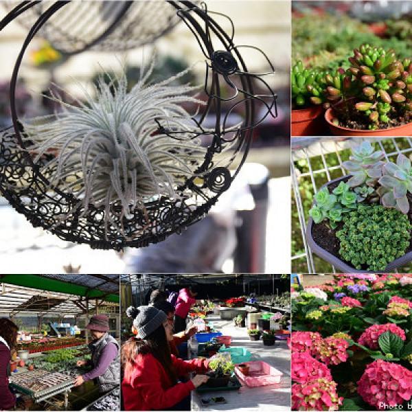 桃園市 觀光 觀光工廠‧農牧場 中興花卉農場