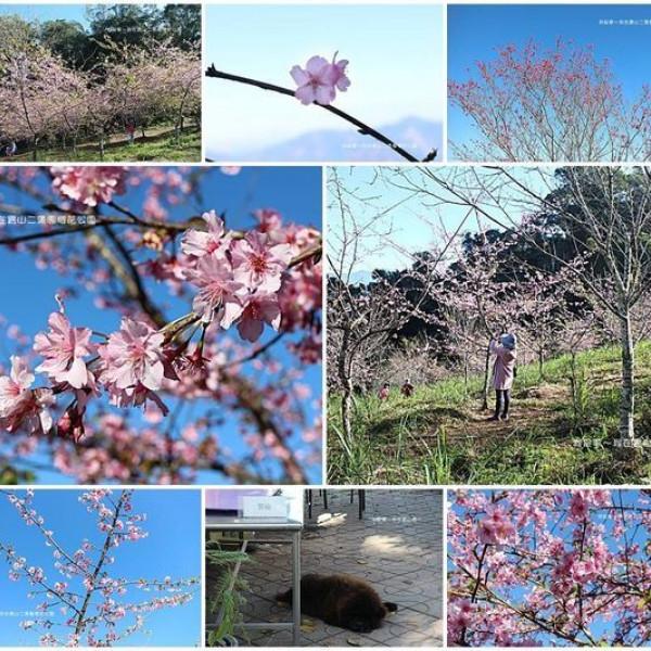 高雄市 觀光 公園 寶山二集團櫻花公園