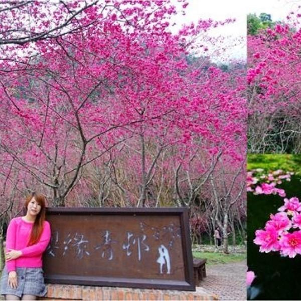 宜蘭縣 觀光 觀光景點 台七甲八重櫻花林