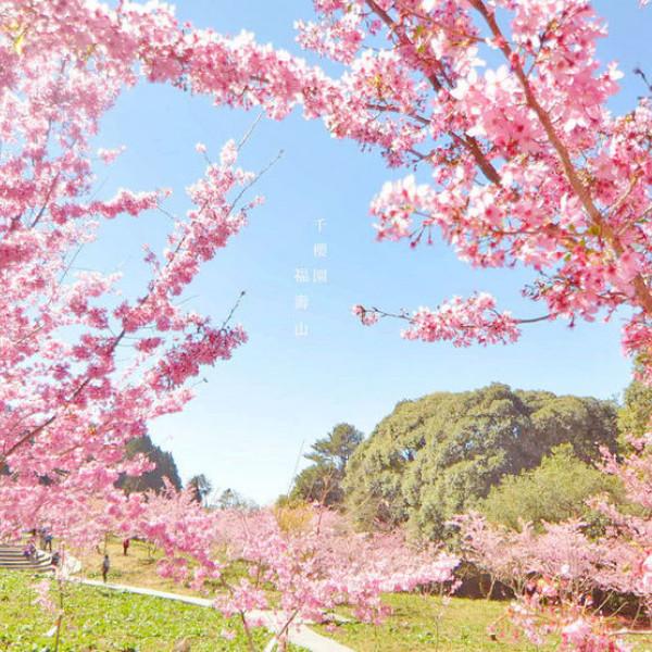 台中市 觀光 觀光工廠‧農牧場 千櫻園