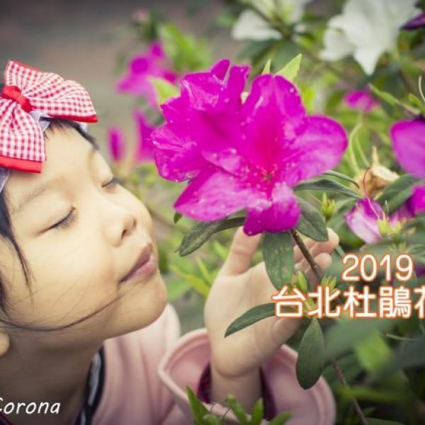 台北市 休閒旅遊 景點 博物館 2019台北杜鵑花季