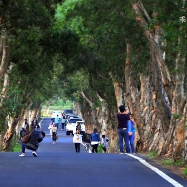 桃園市 觀光 觀光景點 白千層綠色隧道