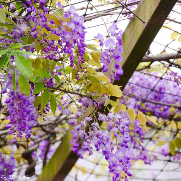 桃園市 購物 其他 和春花卉農場