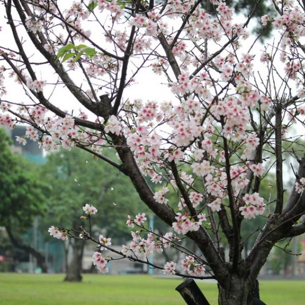 桃園市 休閒旅遊 景點 公園 龍岡森林公園