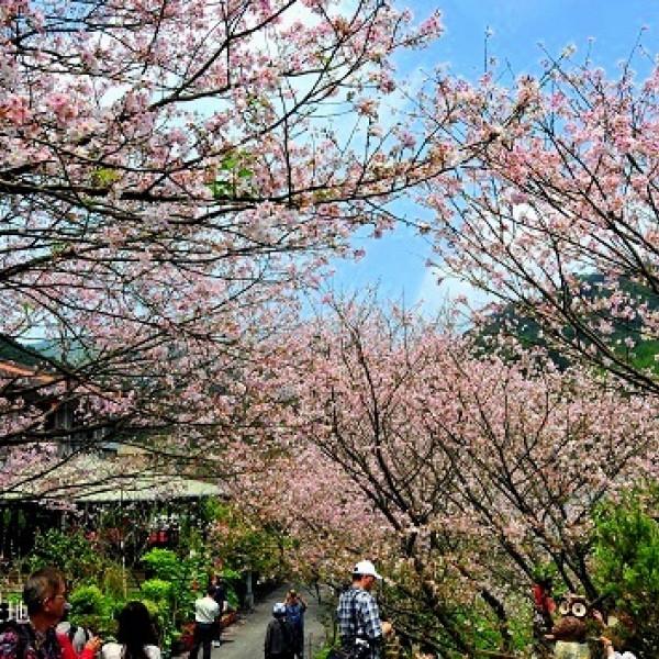 台北市 休閒旅遊 景點 觀光花園 橘咖啡