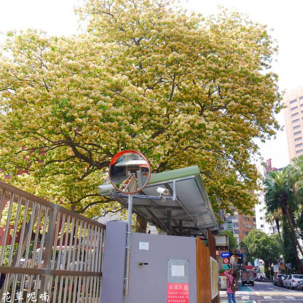 台北市 休閒旅遊 景點 公園 台電加羅林魚木