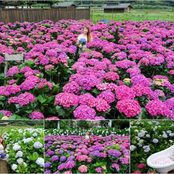台北市 休閒旅遊 景點 觀光花園 花谷海芋園