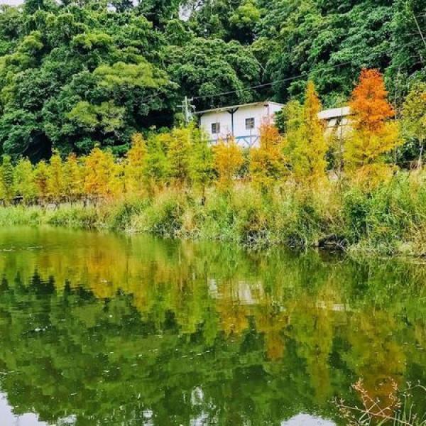 桃園市 休閒旅遊 景點 公園 月眉人工濕地生態公園