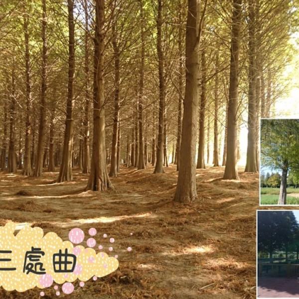 桃園市 休閒旅遊 景點 景點其他 八德落羽松森林