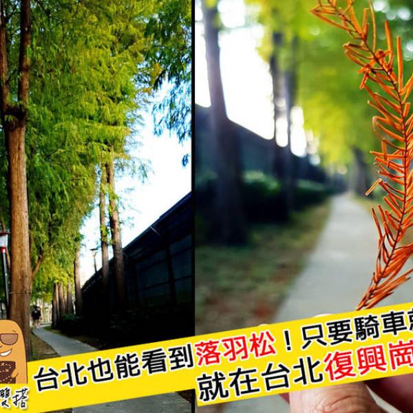 台北市 休閒旅遊 景點 公園 復興崗落羽松步道