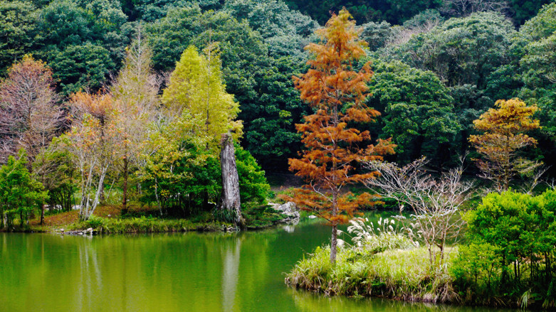 宜蘭縣大同鄉 明池國家森林遊樂區