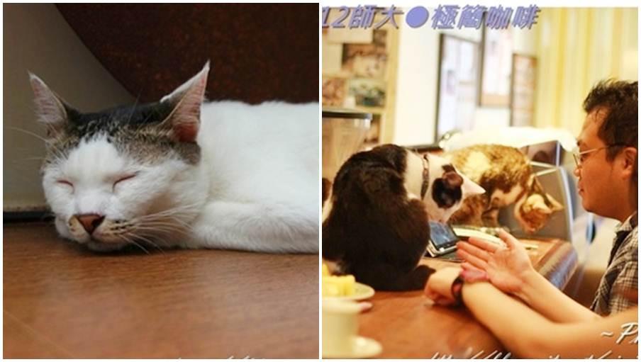 台北市大安區 貓孩在極簡 (極簡咖啡館)