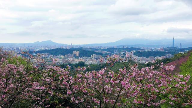 新北市新店區 騰龍御櫻31