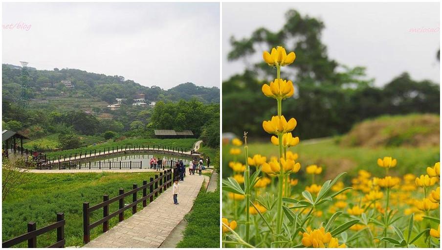 台北市文山區 樟湖步道