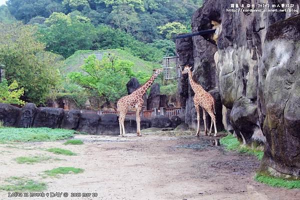 台北市文山區 臺北市動物園