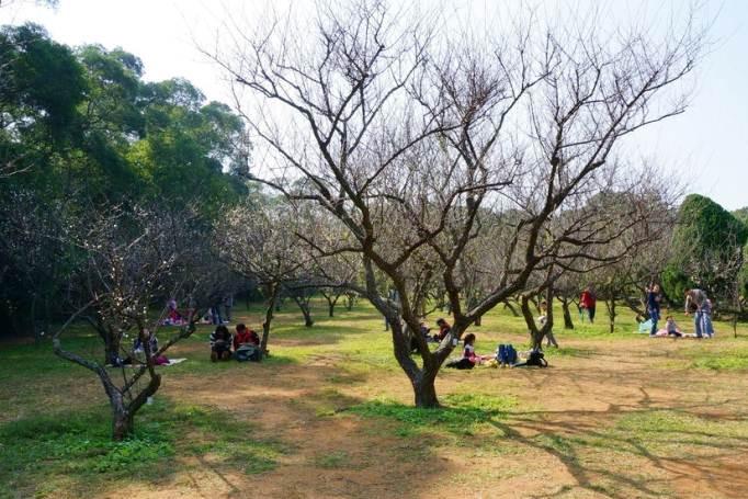 新竹市東區 清華大學梅園