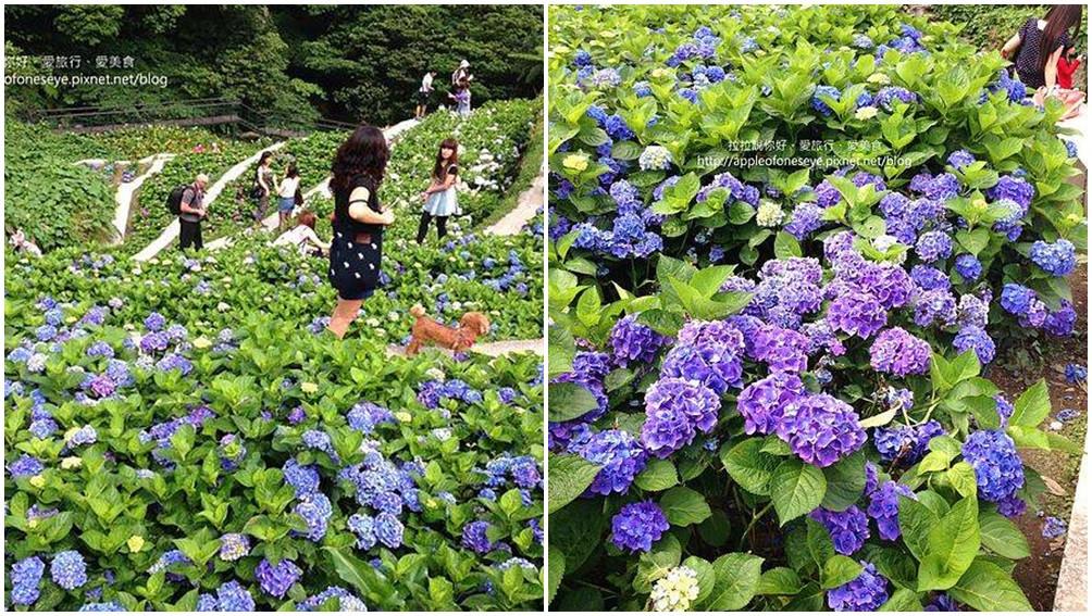 台北市北投區 大梯田花卉生態農場