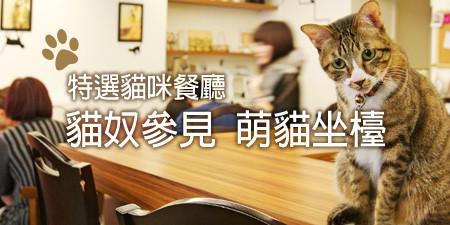 上班族周末療癒放鬆哪裡去?貓咪餐廳大特搜 貓店長快用肉球來撫慰我們吧!