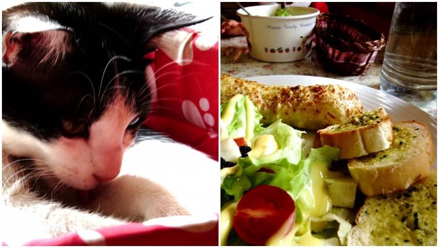 高雄市左營區 日光貓Sunbeam cat