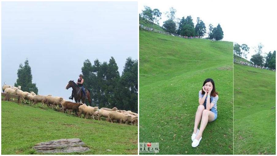 南投縣仁愛鄉 清境農場青青草原