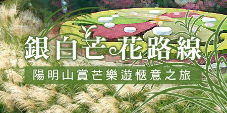 【銀白芒花路線】陽明山賞芒樂遊愜意之旅